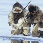 Eskimska prehrana je jako loša po zdravlje eskima, a još više po zdravlje životinja koje love.