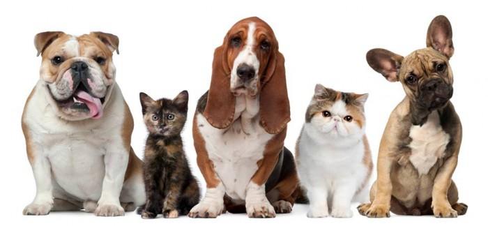 """Treća tribina u ciklusu """"Oslobođenje životinja"""": Prisilna kastracija ne-ljudskih životinja - za ili protiv?"""