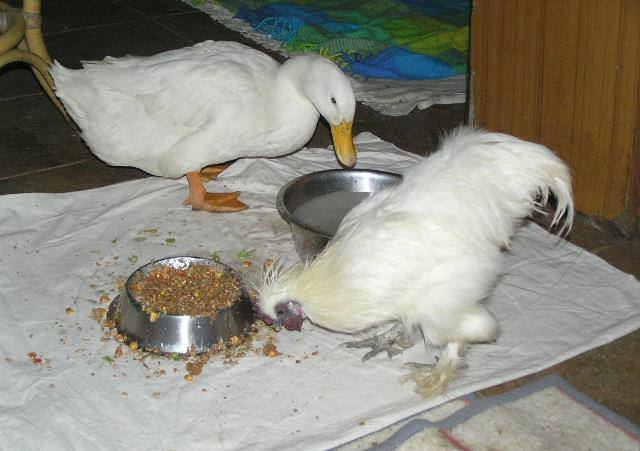 Svidjela im se večera.