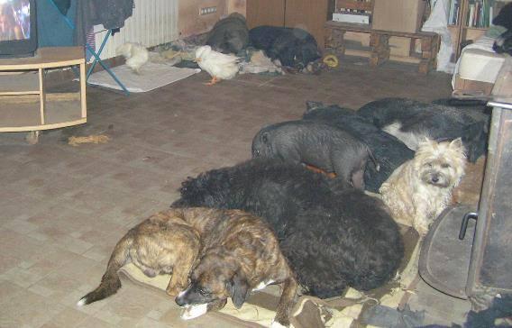"""Zatišje pred """"buru"""". Prasci i psi odmaraju, a Čupko i Bela se i dalje pripremaju za novogodišnju večeru."""