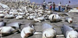 Tko su opasnije ubojice; ljudi ili morski psi?