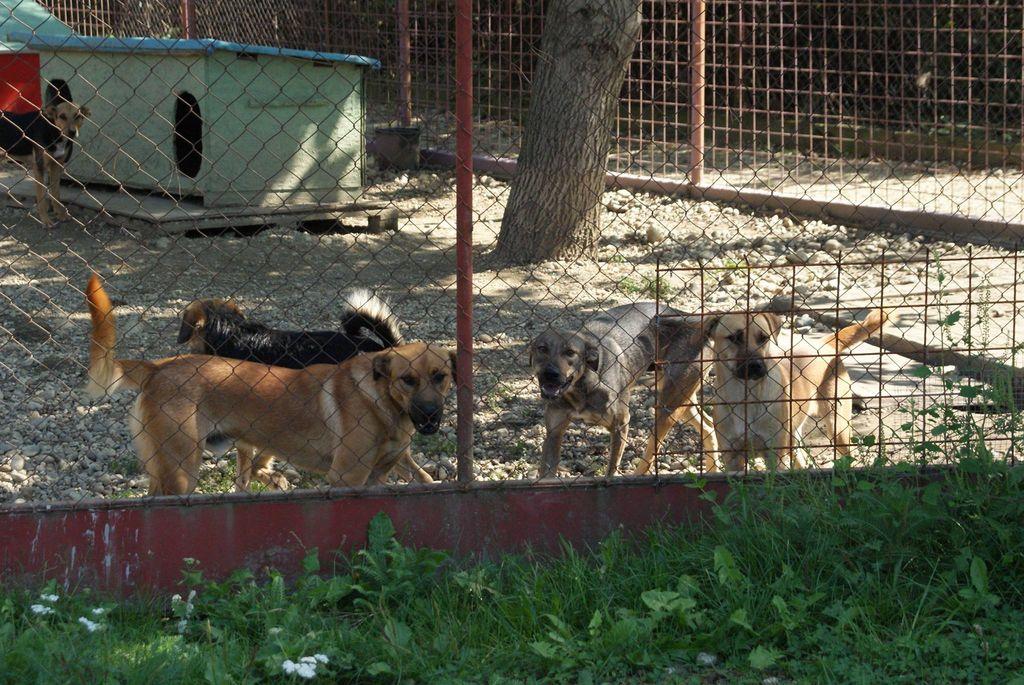 """Romano Bolković: """"Vladajmo se kao ljudi barem prema životinjama."""""""
