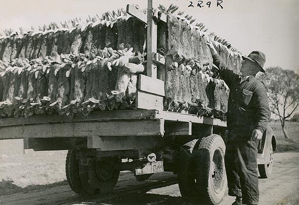 Kamion ubijenih kunića.