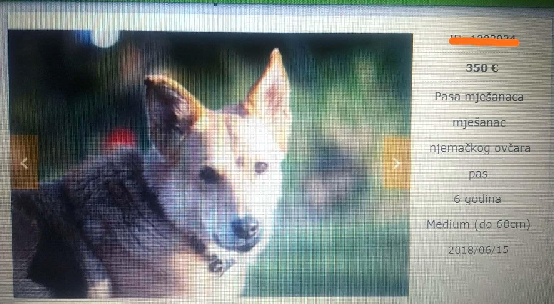 """""""Udomljavanje"""" s cijenom: 350 eura - pas mješanac"""
