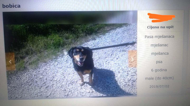 """""""Udomljavanje"""" s cijenom: Bobica - pas mješanac, cijena na upit"""